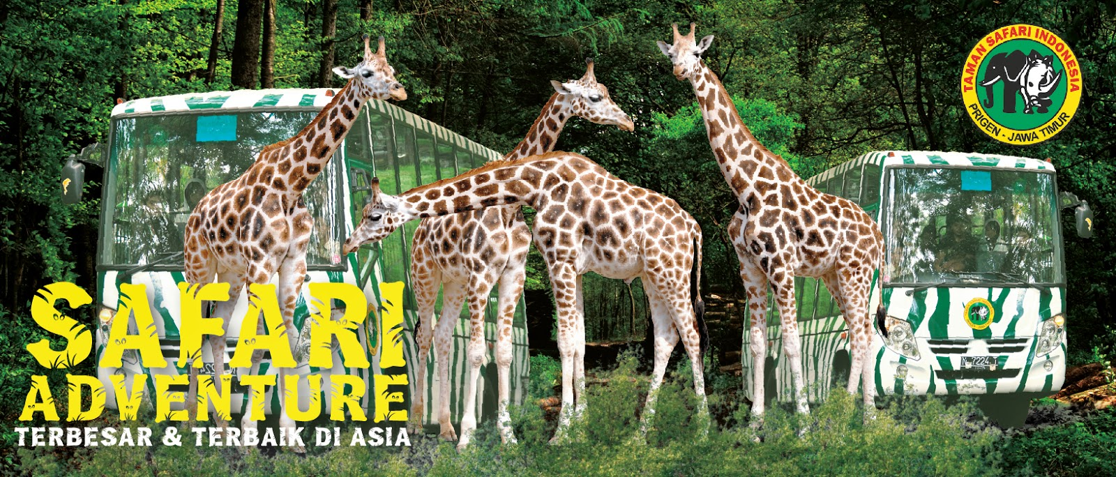 Taman Safari Prigen Study Tour Bp 4 Tips Trik Indonesia
