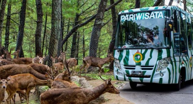 Taman Safari Puncak Bogor Nikmati Asyiknya Beinteraksi Langsung Garasitogel Indonesia
