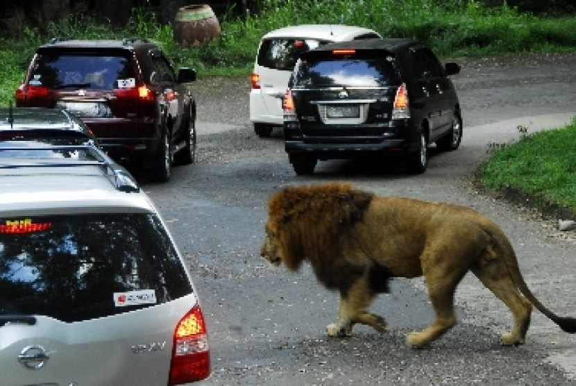 Taman Safari Tempat Wisata Terbaik Kabupaten Bogor Republika Online Indonesia