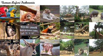 Trip Taman Safari Indonesia Bandung West Java Javatour Kab Bogor