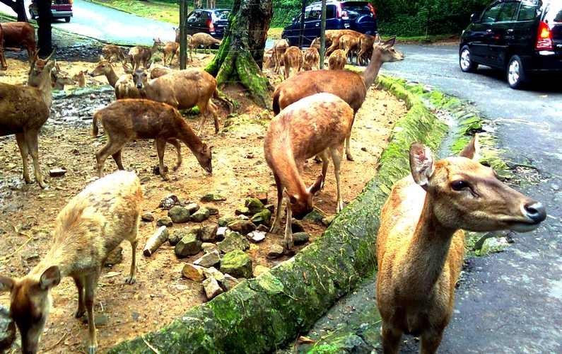 Website Resmi Kabupaten Bogor Menikmati Keindahan Keseruan Tamansafari2 Tamansafari5 Taman