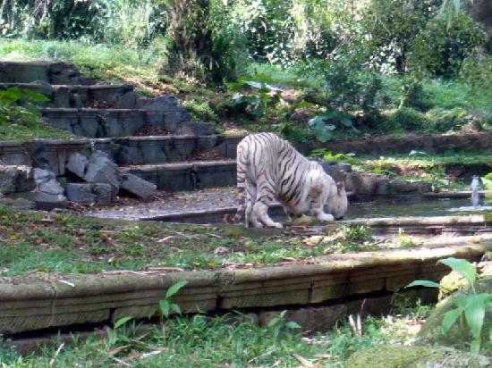 Wisata Kuliner Indonesia Taman Safari Bogor Kab