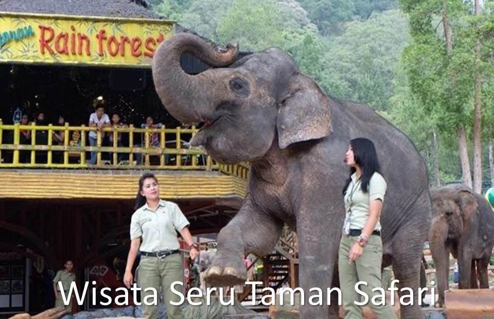 Wisata Seru Taman Safari Bogor Kepo Trip Indonesia Kab