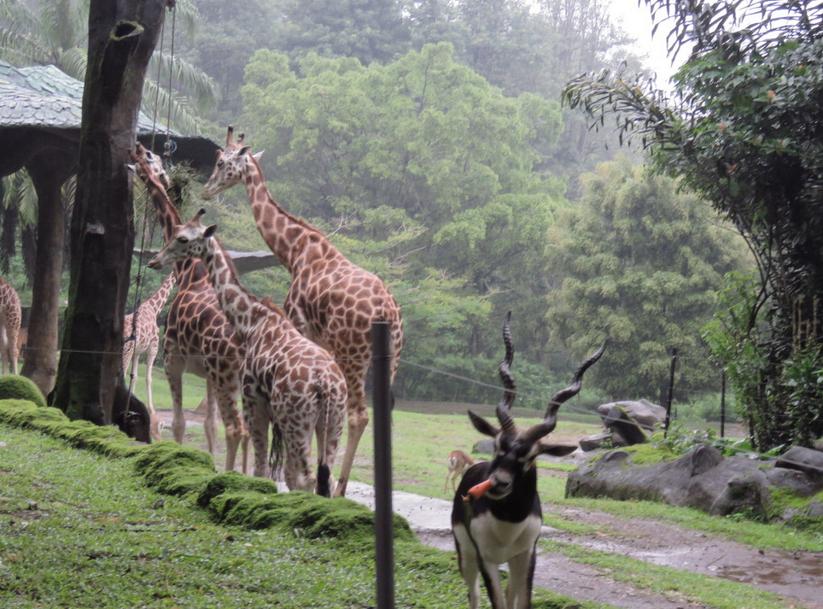 Wisata Taman Safari Indonesia Sebagai Tempat Favorite Berlibur Bagi Menggunakan