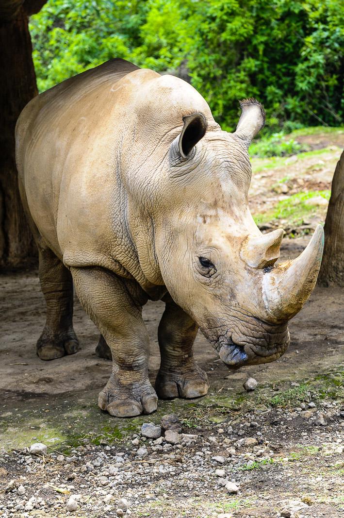 Wonderful Indonesia Taman Safari Badak Bogor Kab