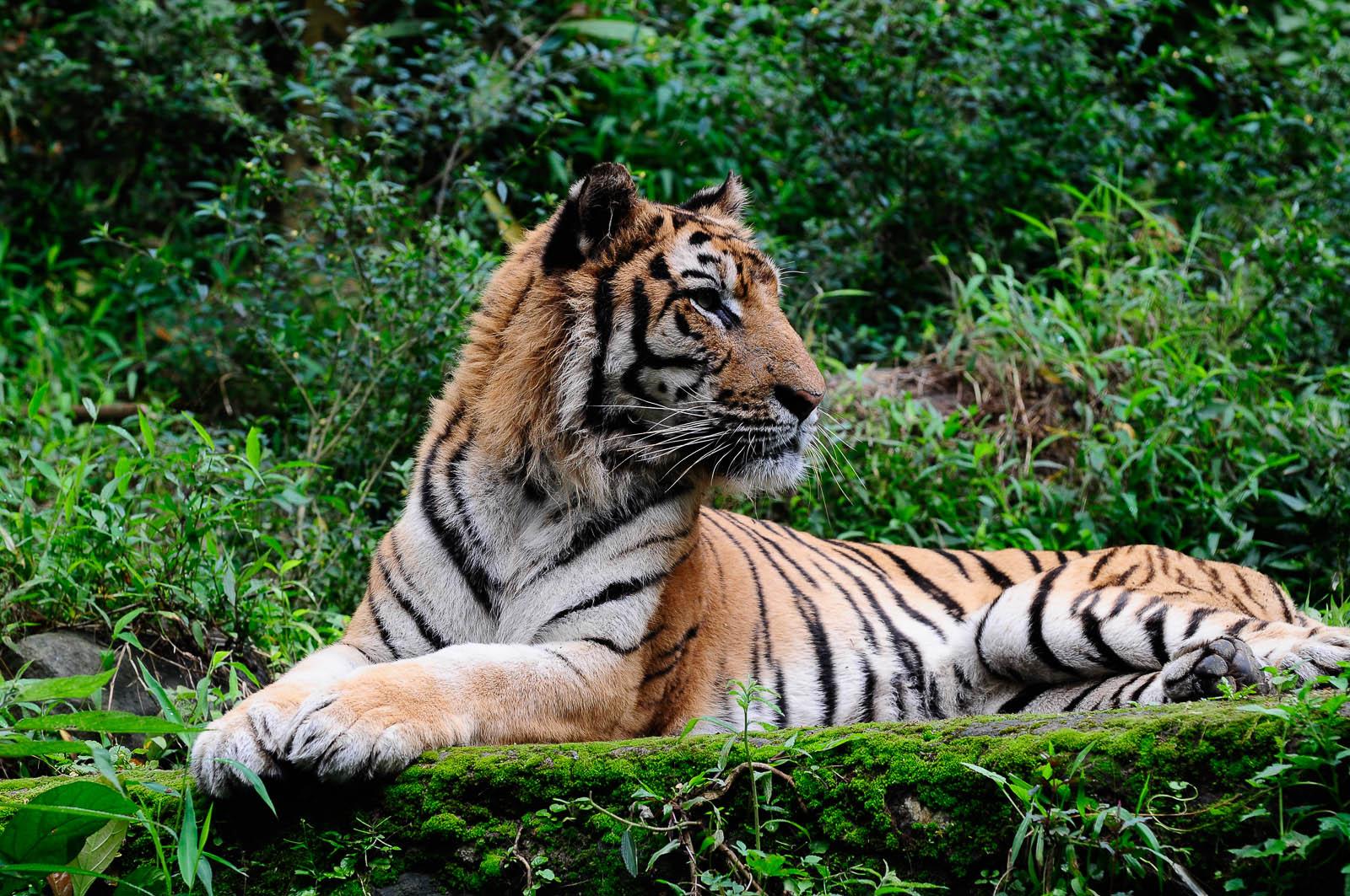 Wonderful Indonesia Taman Safari Kab Bogor