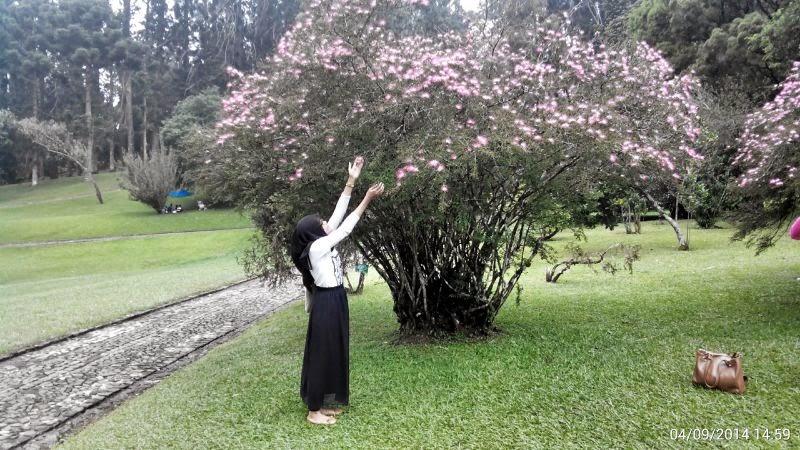 10 Tempat Wisata Bogor Ngehits Instagramable Taman Bunga Sakura Kebun