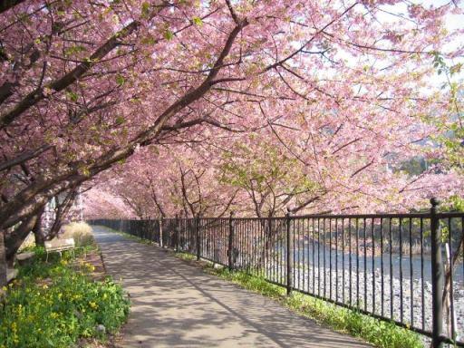 5 Tempat Wisata Beda Bogor Warung Misterius Taman Sakura Kebun