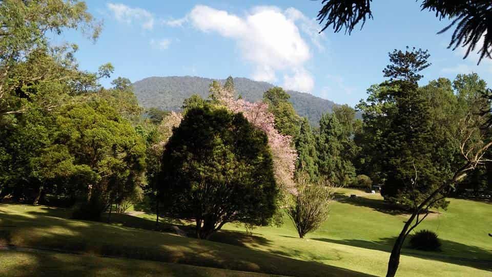 Cibodas Puncak Tempat Wisata Camping Outbound Hiking Bunga Sakura Taman