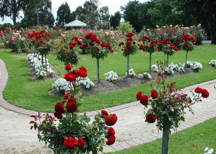 Harga Tiket Masuk Taman Sakura Kebun Raya Cibodas Terbaru 2018
