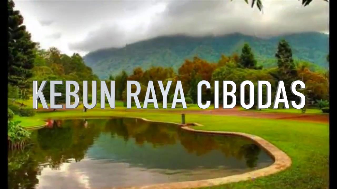 Kebun Raya Cibodas Cianjur Wisatacianjur Youtube Taman Sakura Kab Bogor