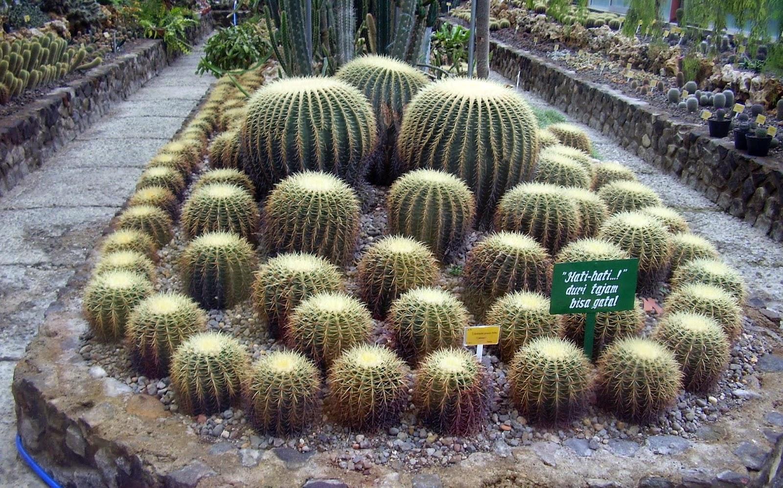 Kebun Raya Cibodas Hijau Sejuknya Alam Pegunungan Borneoscape Rumah Kaca