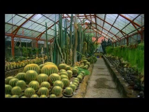Kebun Raya Cibodas Indonesia Youtube Taman Sakura Kab Bogor