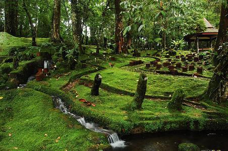 Kebun Raya Cibodas Mandalawangi Camping Ground Taman Lumut Sakura Kab