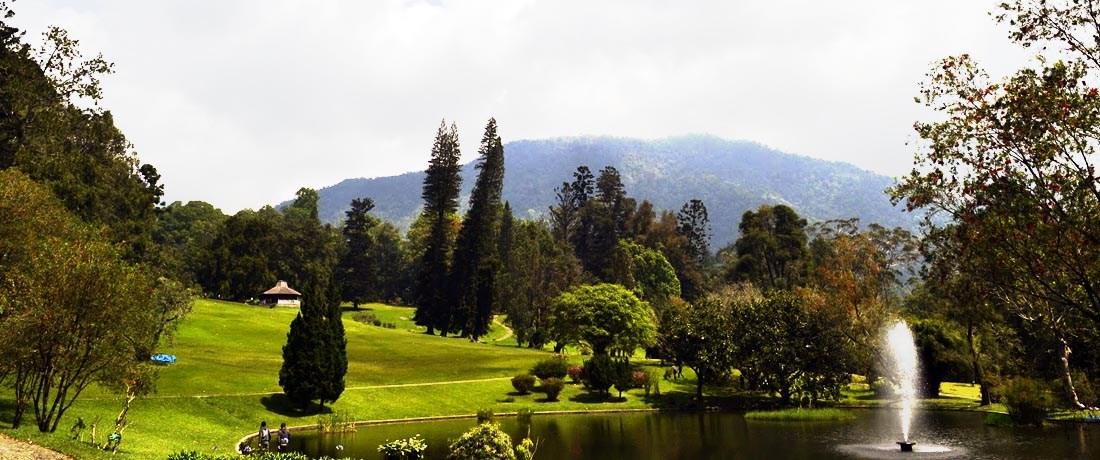 Kebun Raya Cibodas Wisata Bumi Perkemahan Mandalawangi Taman Sakura Kab