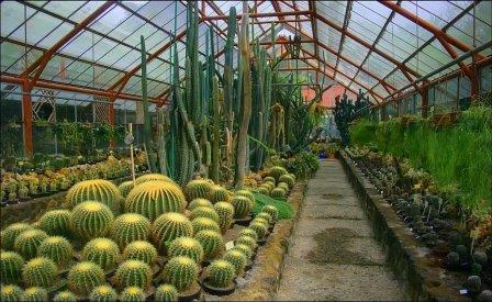 Kebun Raya Cobodas Salah Satu Bukti Kekayaan Flora Indonesia Cibodas