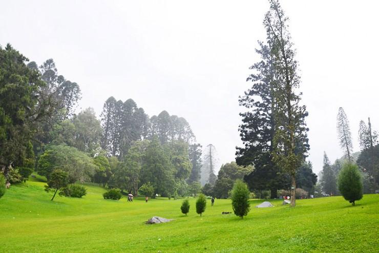 Mirna Ronie 19 Tempat Wisata Bogor Puncak Memikat Taman Sakura