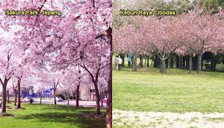 Tempat Wisata Favorit Keindahan Kesejukan Alamnya Kebun Raya Termasuk Botanical