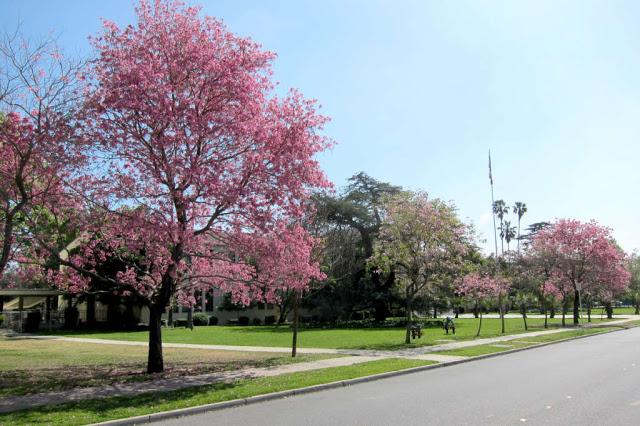 Tempat Wisata Hitz Bogor Mariberjalansantai Kebun Raya Cibodas Puncak Taman