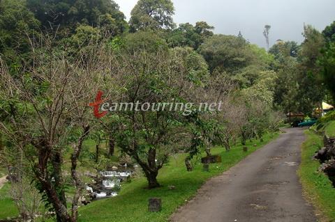 Wisata Flora Kebun Raya Cibodas Teamtouring Area Taman Sakura Kab