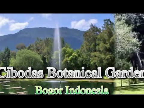 Wisata Indonesia Kebun Raya Cibodas Bogor Jawa Barat Mopon Id