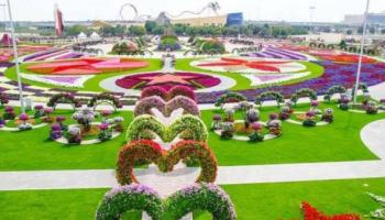 Wisata Taman Sakura Kebun Raya Cibodas Serasa Jepang Keindahan Bunga