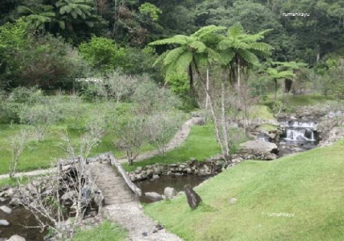 Wisata Taman Sakura Kebun Raya Cibodas Serasa Jepang Lokasi Kab
