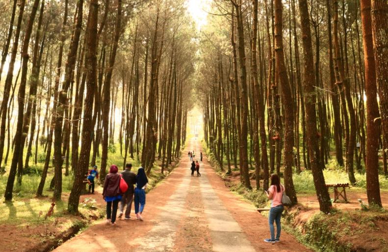 27 Tempat Wisata Bogor Favorit Hits Dikunjungi Taman Alam Kragilan