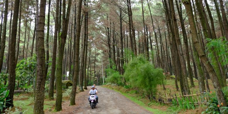 5 Obyek Wisata Seru Sentul Kompas Suasana Hutan Pinus Gunung