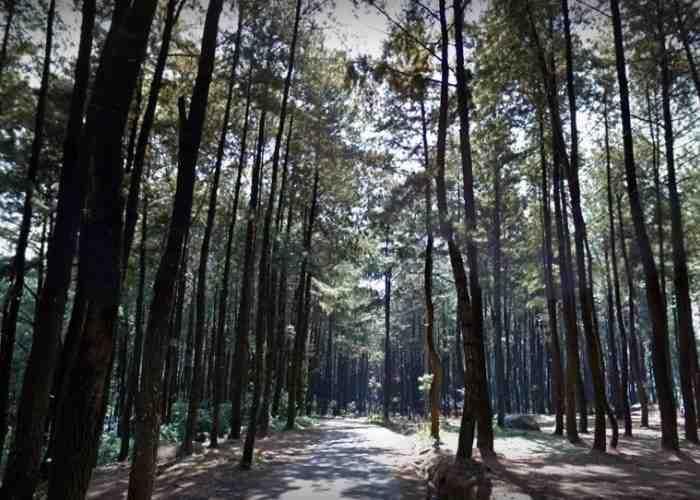 Gunung Pancar Keindahan Wisata Alam Hutan Pinus Bogor Kekayaan Indah