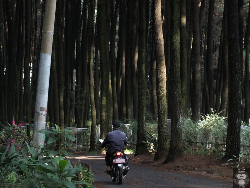Gunung Pancar Nikmatnya Kembali Alam Lovely Bogor Menuju Taman Wisata