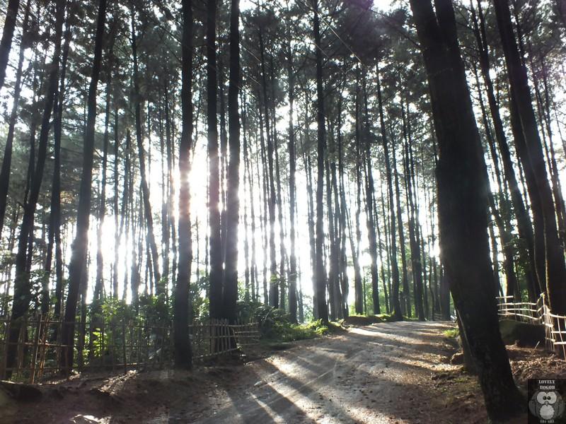 Gunung Pancar Nikmatnya Kembali Alam Lovely Bogor Taman Wisata Kab