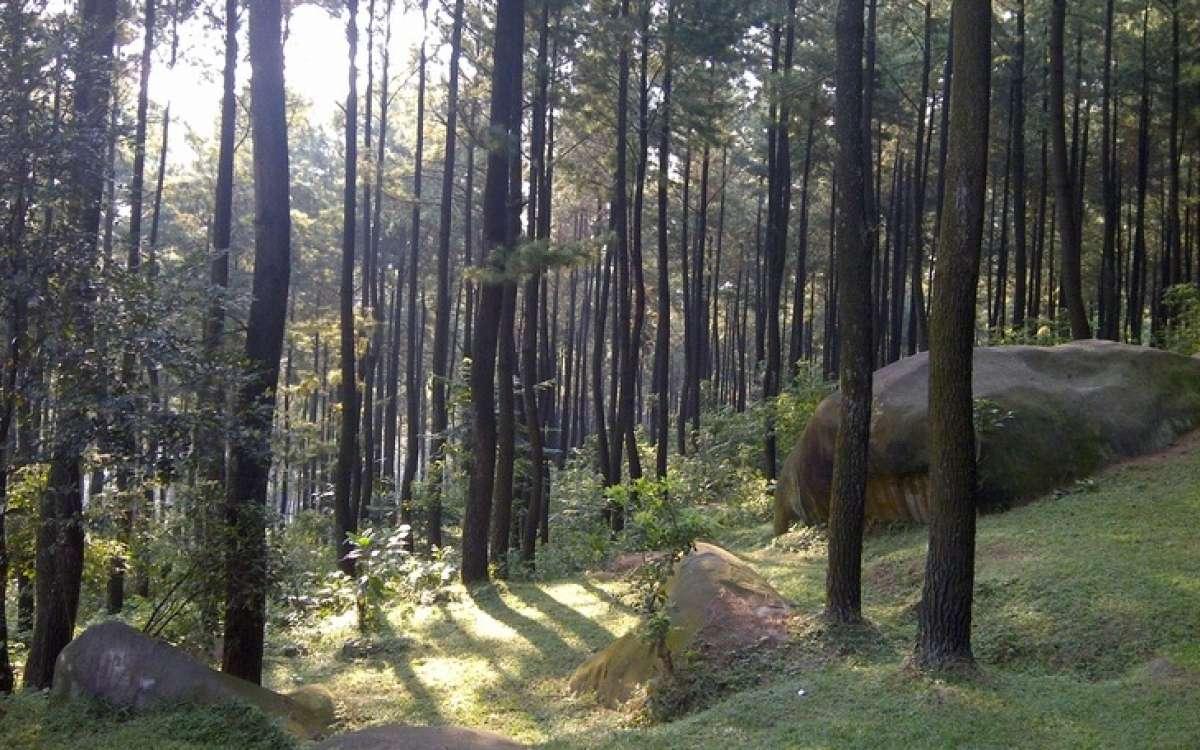 Gunung Pancar Segarnya Wisata Alam Kekinian Jawa Barat Taman Kab