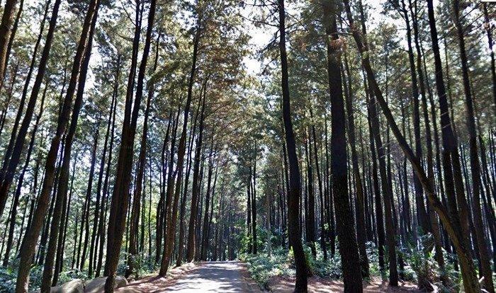 Gunung Pancar Sentul Bogor Kaskus Wisata Kab