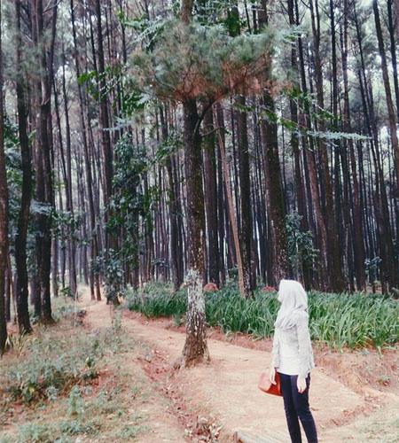 Harga Tiket Masuk Taman Wisata Alam Gunung Pancar Bogor 2017