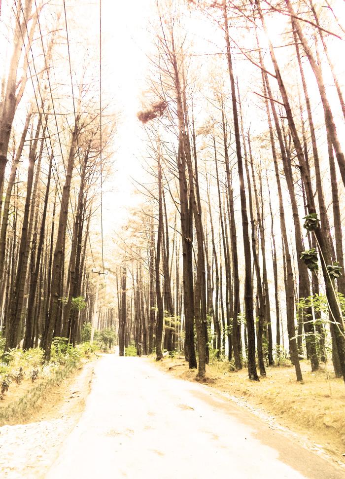 Weekend Review Menikmati Hutan Pinus Gunung Pancar Bogor Wisata Kab