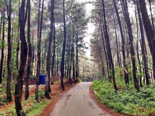 Wisata Gunung Pancar Bogor Keren Loh Informasi Tempat Terbaru Taman