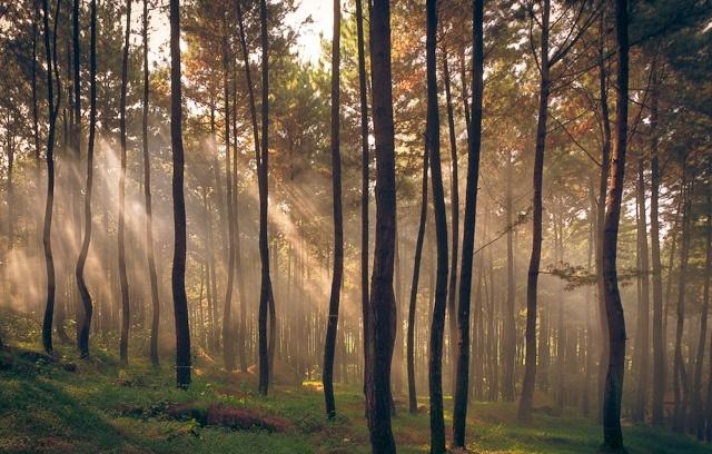 Wisata Kekinian Hutan Pinus Gunung Pancar Sentul Klikhotel Termasuk Taman