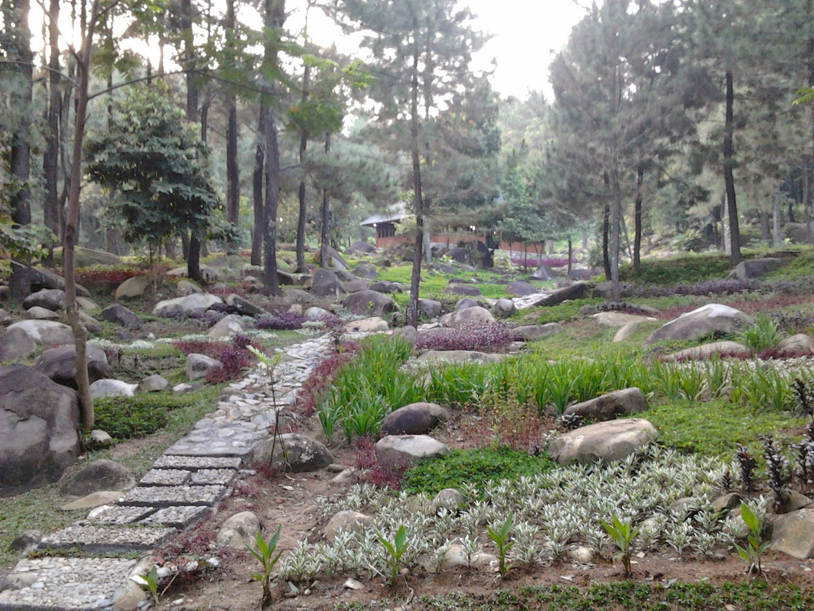 Wisata Kota Hujan Bogor Puncak Tiga Tempat Alam Melewatkan Libur