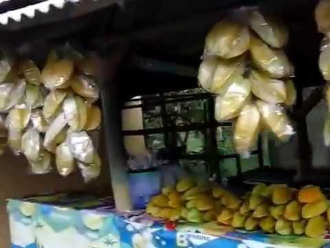 Agrowisata Kebun Belimbing Ngringinrejo Kalitidu Bojonegoro Youtube Kab