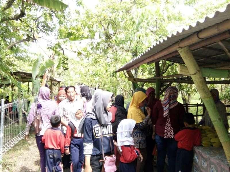 Liburan Agrowisata Kebun Belimbing Ramai Pengunjung Berita Bojonegoro Ngringinrejo Kab