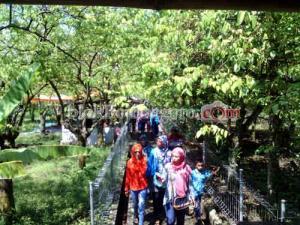 Murah Agrowisata Kebun Belimbing Ramai Pengunjung Ngringinrejo Kab Bojonegoro
