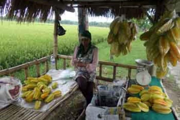 Pengunjung Agrowisata Belimbing Bojonegoro Meningkat Antara News Kebun Ngringinrejo Kab