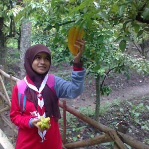 Pengunjung Agrowisata Kebun Belimbing Mencapai 11 368 Desa Bojonegoro Jumlah