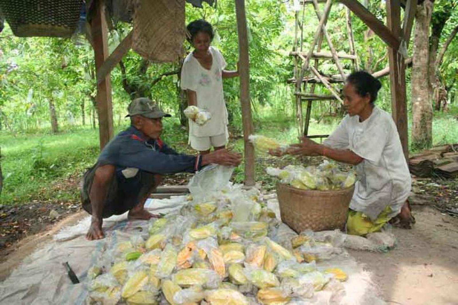 Pesan Belimbing Bojonegoro 1 Ton Pekan Carrefour Agrowisata Kebun Ngringinrejo