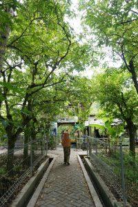 Serbu Belimbing Manis Agrowisata Kebun Bojonegoro Dua Jenis Ditanam Bangkok
