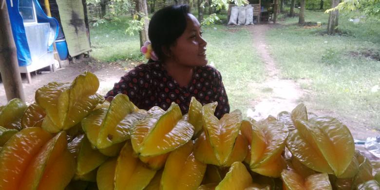 Yuk Petik Belimbing Ngringinrejo Tepi Bengawan Solo Halaman 1 Agrowisata