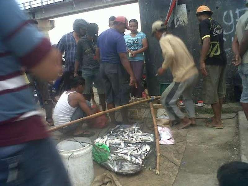 Debit Air Bengawan Solo Naik Tangkapan Ikan Bendungan Gerak Bojonegoro