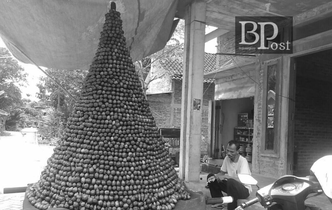 Bojonegoro Post Part 95 Besok Festival Salak Digelar Gambarannya Penangkaran