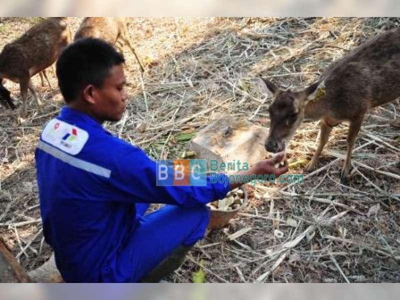 Penangkaran Rusa Jawa Hutan Malo Berhasil Berita Bojonegoro Oleh Vera
